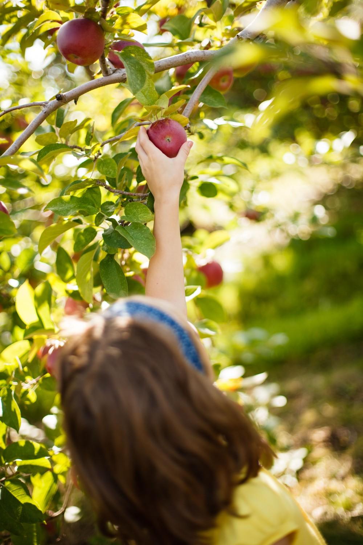 Garten Tipps für gesunde Obst- und Gemüsepflanzen - News, Bild 1