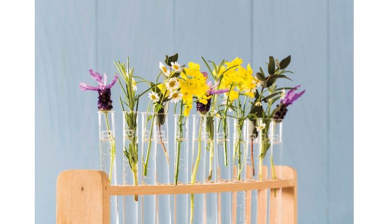 Service Natürlich farbig – Ökologische Farben für gesundes Wohnen von Auro - News, Bild 1